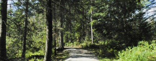 a walking trail in the summer