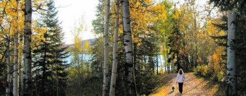 Girl walking her dog in the nature trail, with a beautiful view of all the fall foliage